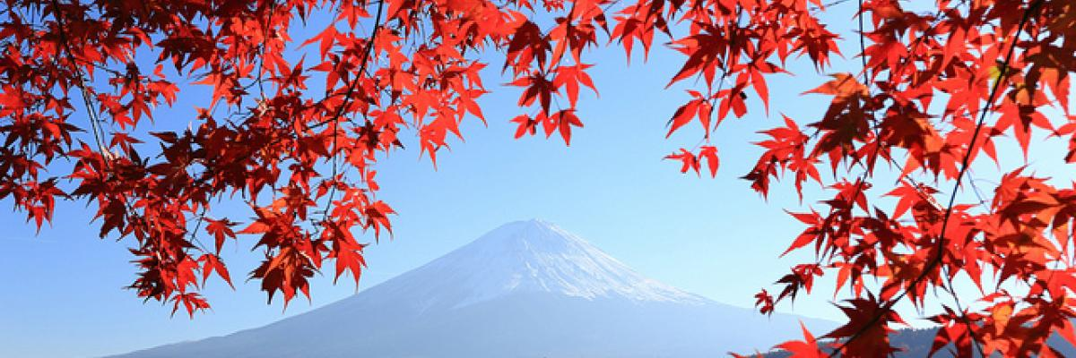 Momiji and Mount Fuji par skyseeker, Licence CC : BY. Source [Flickr]