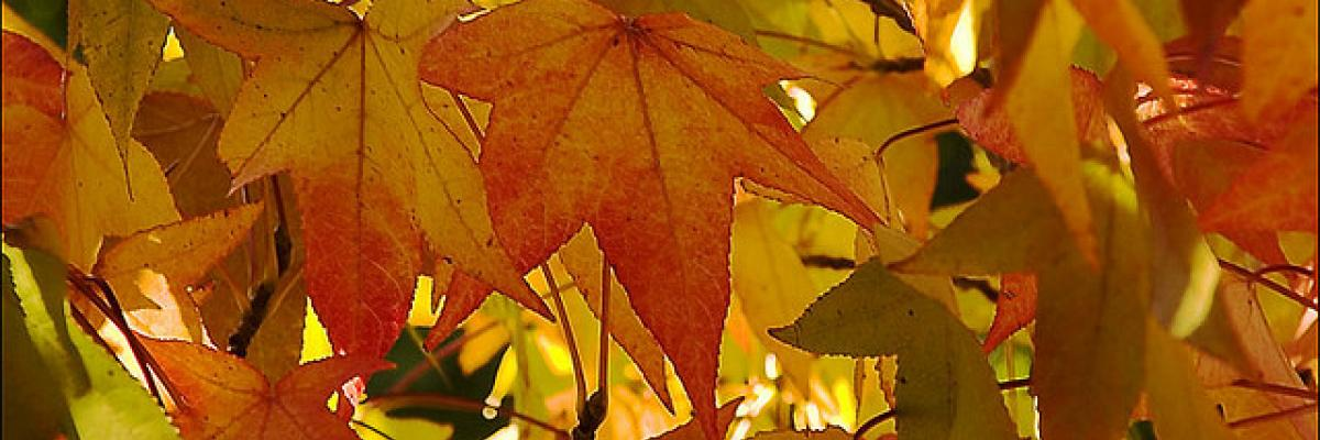 Autumn Leaves 2 by Steve Crane, licence CC:BY-NC-SA, source [Flick'r]