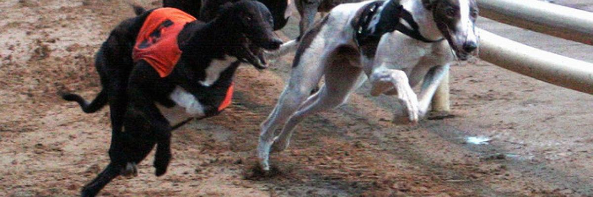 Dog racing at Wimbledon Stadium par  saris0000, licence CC:BY-ND. Source [Flickr]