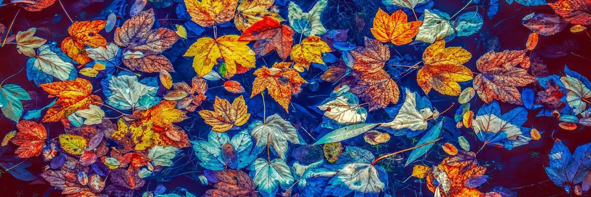 Feuilles d'automne par Couleur, licence CC0. Source [Pixabay]