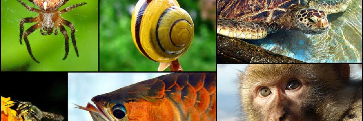 Animal diversity October 2007 par en:User:Justin, licence CC : BY-SA 3.0. Source [Wikimedia commons]