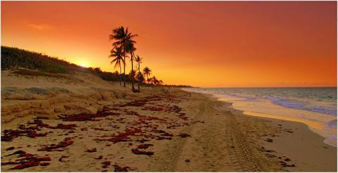 Promenade sur la plage par Pixel, licence CC : BY-NC-ND. Source [Flickr]