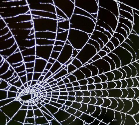 Frosty Morning Web by John Haslma, licence CC:BY. Source [Flickr]