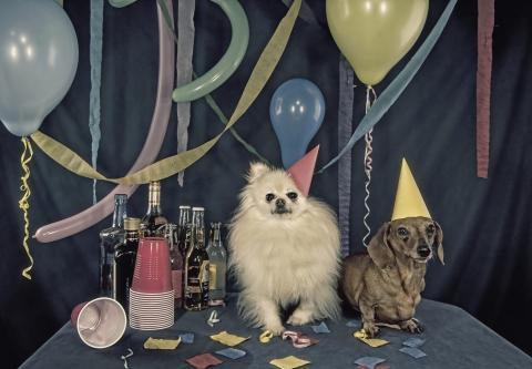 Party animals - serious about partying par MattysFlicks, licence CC : BY. Source [Flickr]