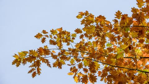 automne par Goultard, licence CC : BY-SA. Source [Flickr]